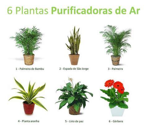 Plantas purificadoras de ar, o melhor que podes ter em tua ...