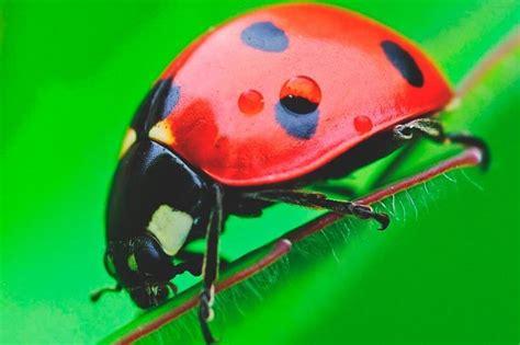 Plantas que atraen insectos beneficiosos | Ella Hoy