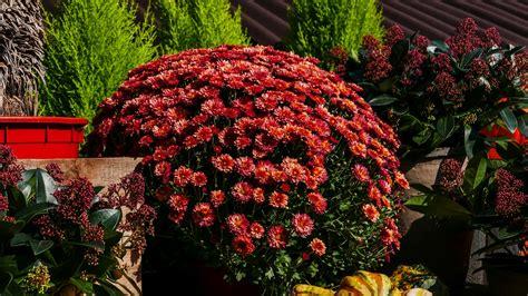 Plantas que florecen todo el año | WormsArgentina.com