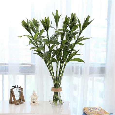 Plantas Que Limpian Las Malas Energias. Cheap Tips Para ...