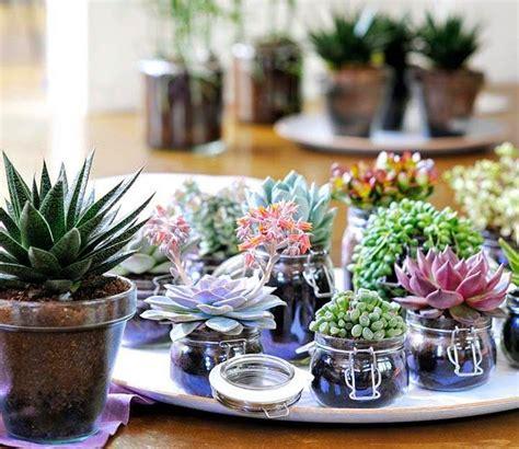Plantas que llenarán tu hogar de Feng Shui | Mi Casa es Feng