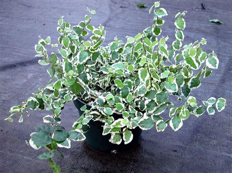 Plantas que Necesitan Poca Luz en el Interior de Casa