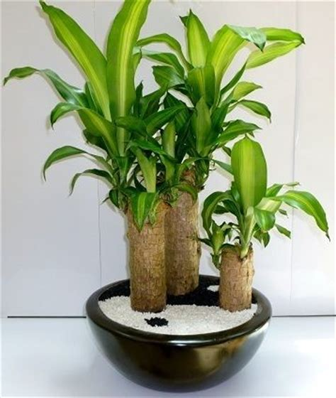 Plantas que puedes tener dentro de tu casa