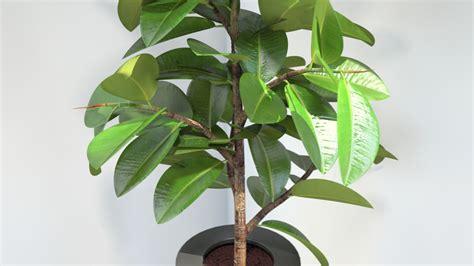 Plantas que purifican el aire   Portal del Alquiler