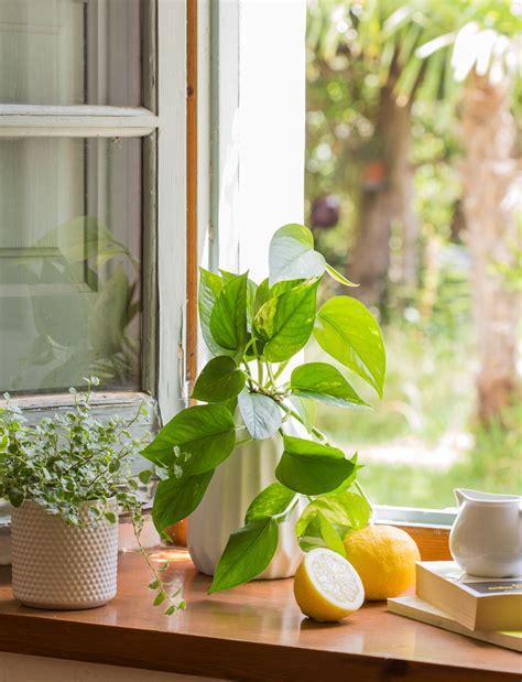 Plantas que te ayudan a dormir