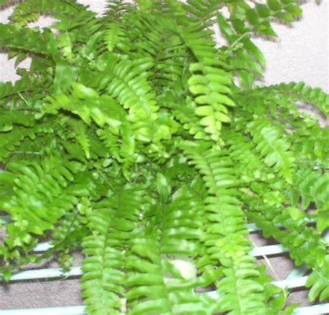 Plantas quisiera saber sus nombres
