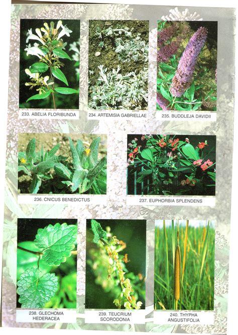 plantas-santos: Base de datos de nombres populares de ...