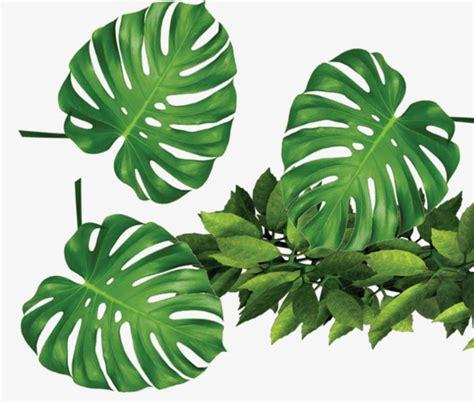 Plantas Tropicales Hojas Verdes, Tropical, Planta, Verde ...