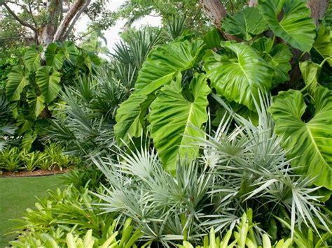 Plantas tropicales | Plantas