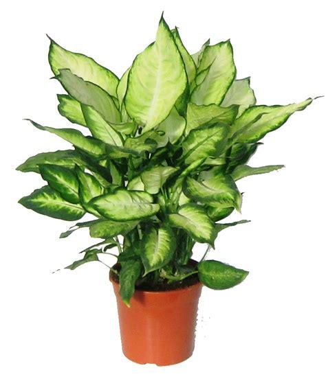 Plantas Verdes Exterior - Diseños Arquitectónicos ...