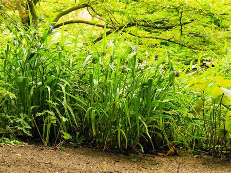 Plantas Verdes Exterior. Good With Plantas Verdes Exterior ...