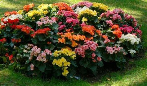 Plantas y flores perfectas para jardines de interior