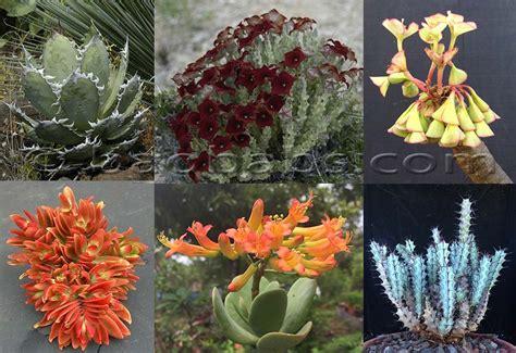 Plantas y semillas tropicales exoticas raras- Venta por ...