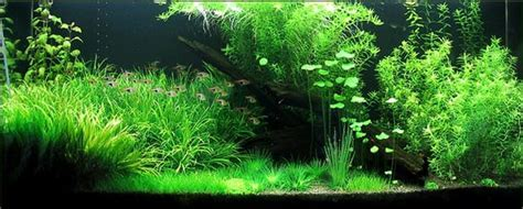 Planted Aquarium Fertilizer - Home