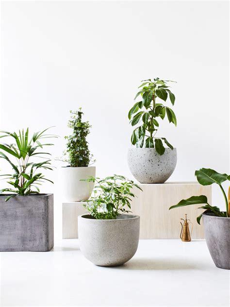 Planters: astounding large indoor plant pots Indoor ...