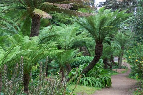 Plantes fossiles : qui sont ces végétaux préhistoriques