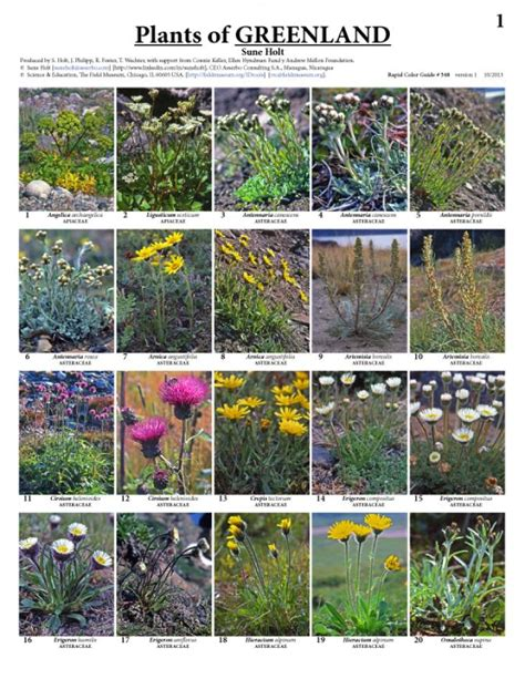 Plants of Greenland | Field Guides