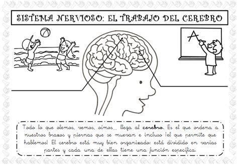 Plastificando ilusiones: El sistema nervioso