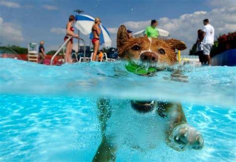 Playas y piscinas para perros: ¡Al agua mascotas ...