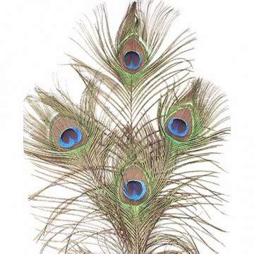 Plumas de Avestruz y otros tipos | Pendientes | 3677 ...
