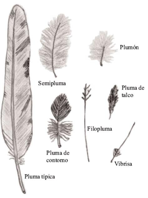 Plumas II - Observación e identificación de aves