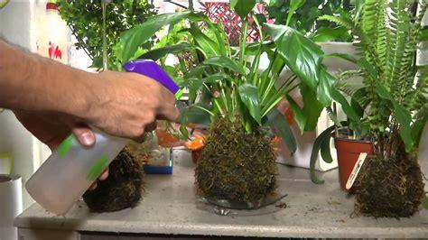 Pon tus plantas en macetas de musgo   YouTube