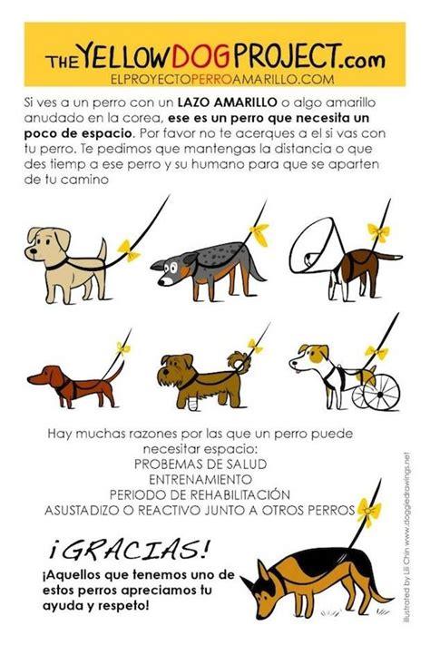 Pon un lazo amarillo en la correa de los perros que ...