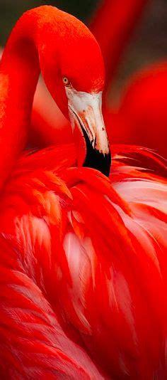 ¿Por qué encoge una pata el flamenco y porq los pájaros ...