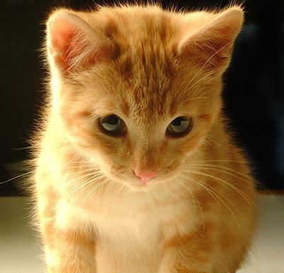 Por que gatos são os melhores amigos do homem?