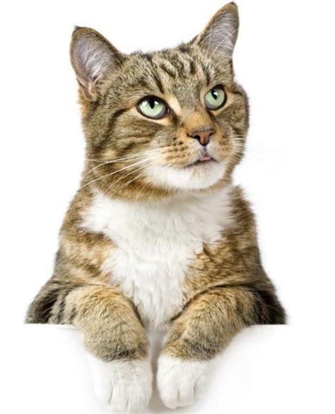 ¿Por qué los gatos amasan?   Mascotas   Taringa!