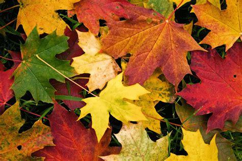¿Por qué se caen las hojas en otoño? - Dream Alcalá