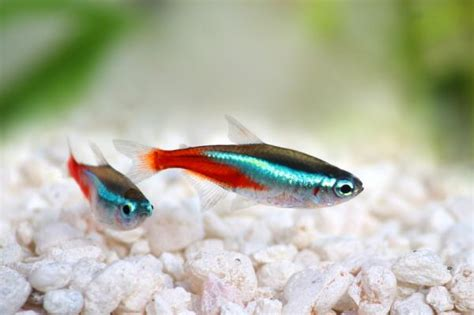 ¿Por qué se mueren los peces del acuario?