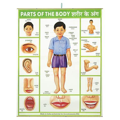 Póster 'Las Partes del Cuerpo'