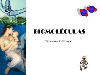 PPT - BIOMOLECULAS PowerPoint Presentation - ID:2155131