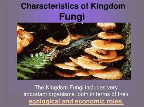 PPT - Characteristics of Kingdom Fungi PowerPoint ...