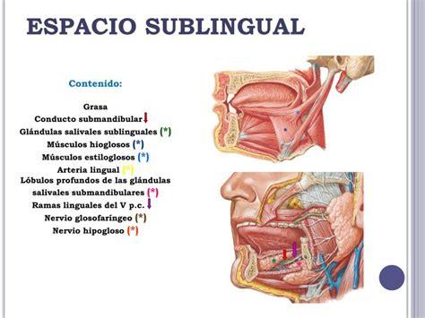 PPT   ESPACIO SUBLINGUAL PowerPoint Presentation   ID:6216273