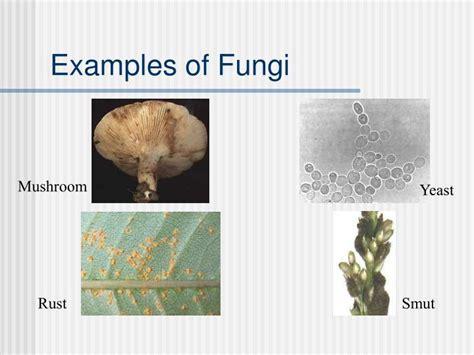 PPT   Kingdom Protista Kingdom Fungi PowerPoint ...