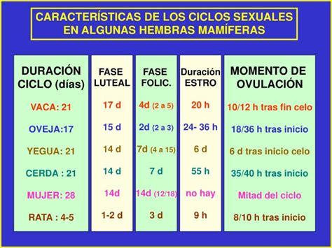 PPT - LOS CICLOS SEXUALES FEMENINOS Ciclo Estral - Ciclo ...