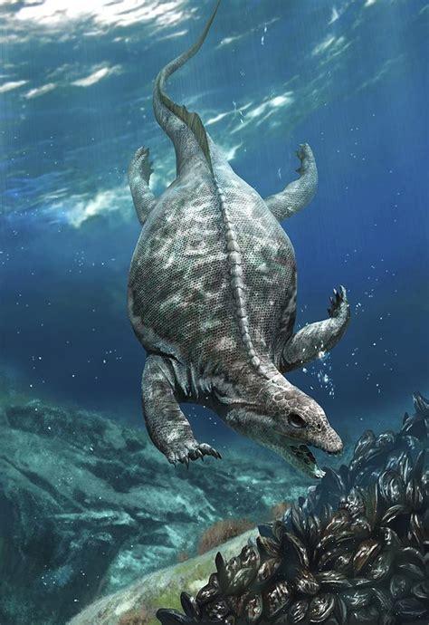 Prehistoric Marine Reptile, Placodus Photograph by Science ...