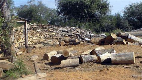 Preocupa la deforestación - Nacionales - ABC Color