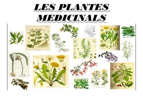 Presentació plantes medicinals