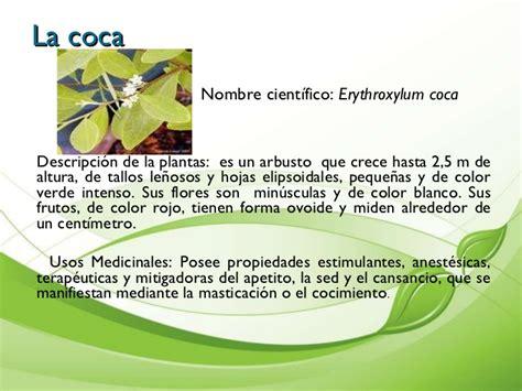Presentaciòn de plantas medicinales cartilla