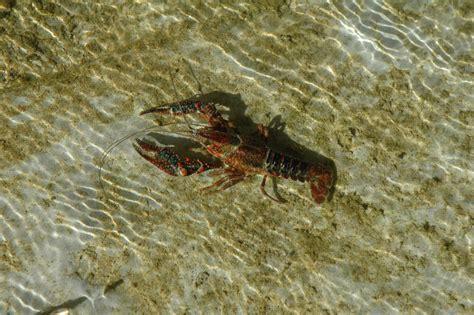 Presentación del libro  Fauna acuática de los ríos de ...
