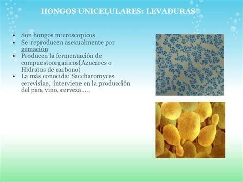 Presentación hongos