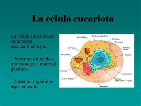 Presentación multimedia sobre la célula   ppt descargar