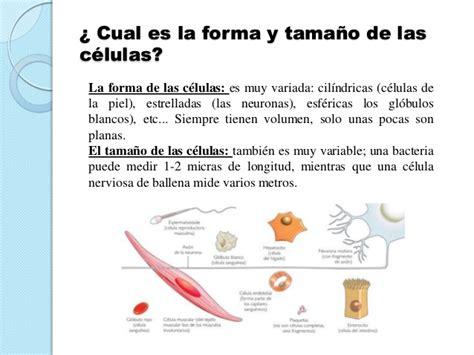Presentación sobre  las células  definición.