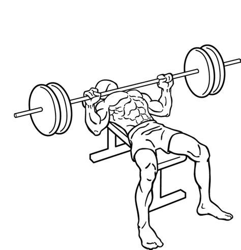 Press de banca plano con barra   Territorio Fitness