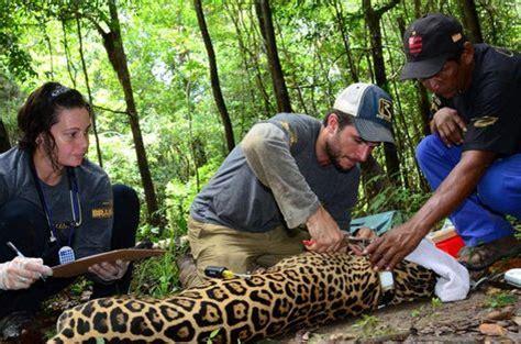 Pretendo pesquisar animais selvagens   o que devo fazer?