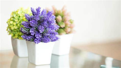 Pretty Indoor Flowering Plants   TODAY.com