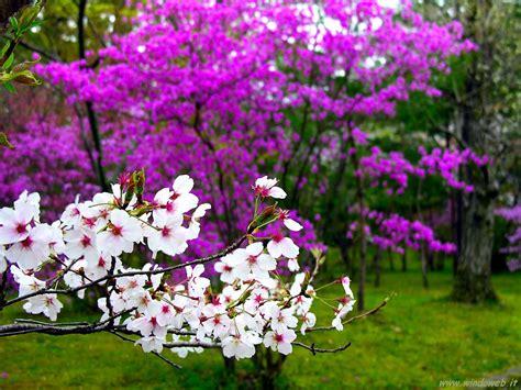 primavera su dedicato a te.......